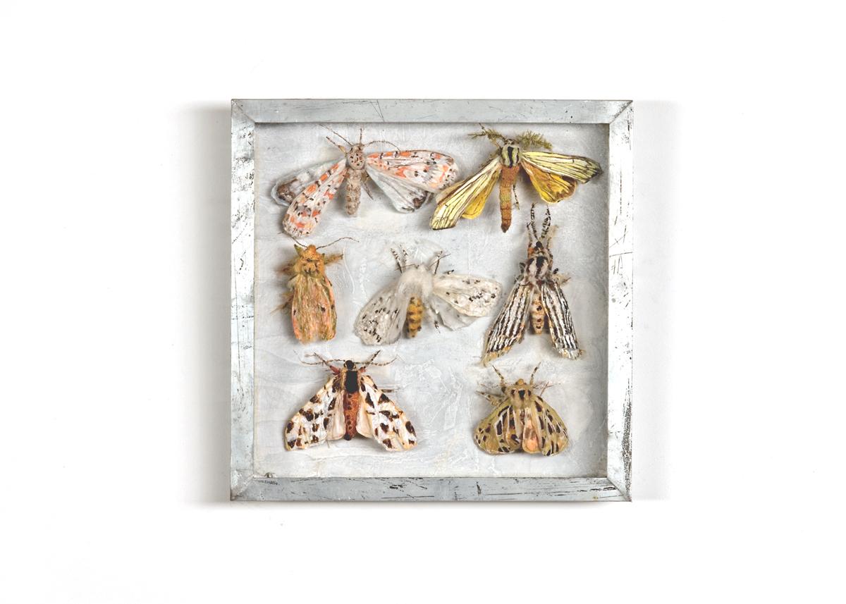 Beervlinders, Collectie V Handgebreid, in zinken doos van 20-20 cm