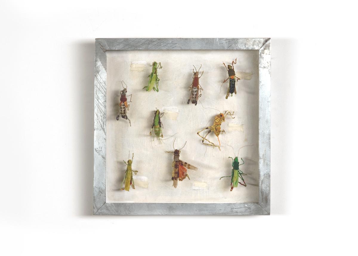 Sprinkhanen Collectie I Handgebreid, in zinken doos van 20-20 cm