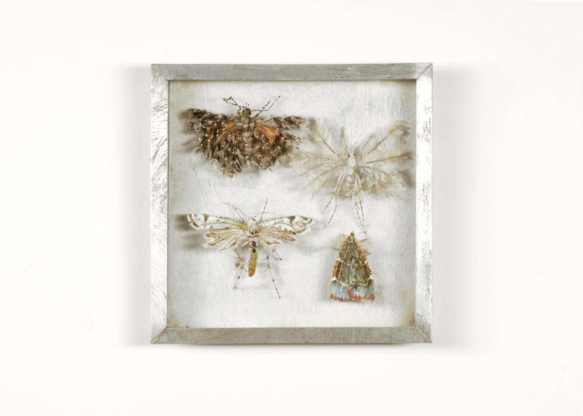 Vedermotten Collectie VI Handgebreid in zinken doos van 20-20 cm