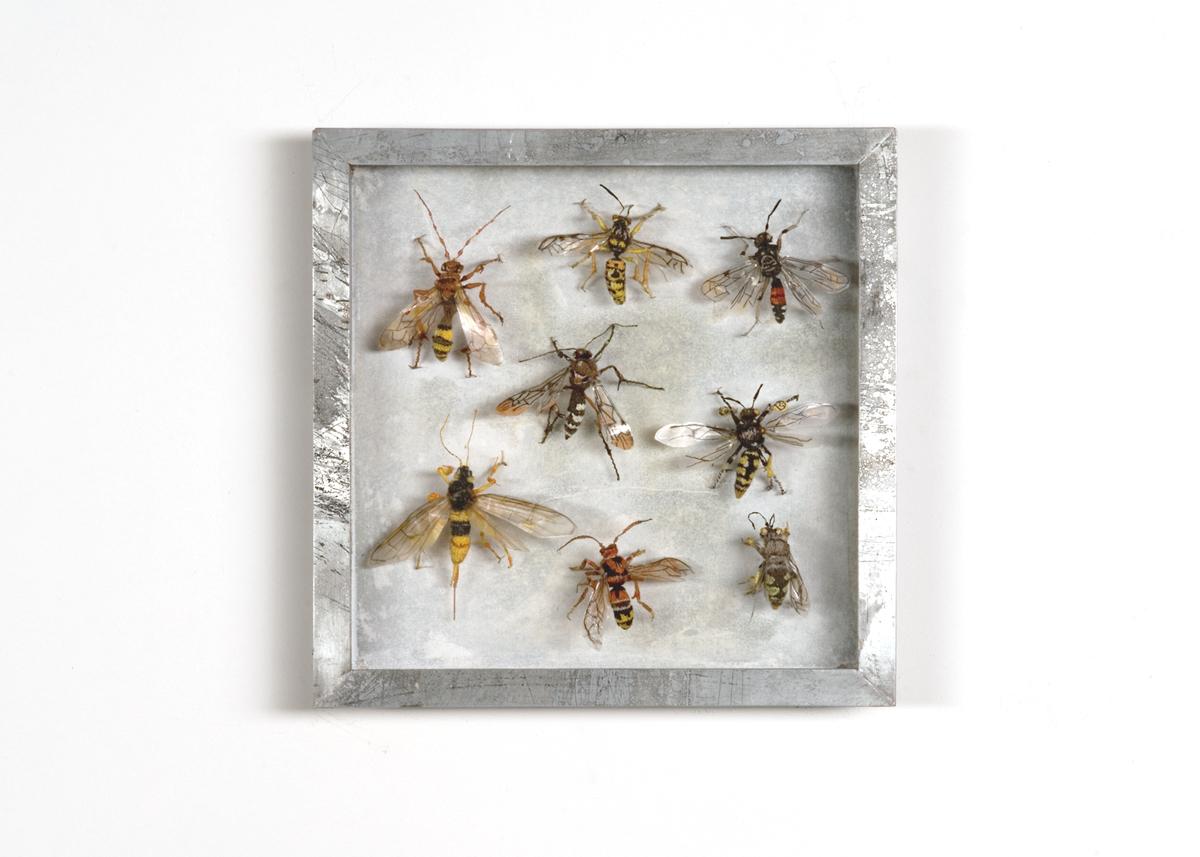Wespen, Collectie III Handgebreid, in zinken doos van 20-20 cm