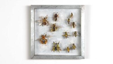 Bijen, Collectie VI