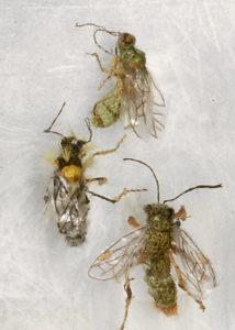 Bijen, detail