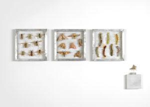Collectie II, Wespen, pijlstaarten en rupsen. Handgebreid Materiaal_ garen, dun ijzerdraad, cellofaan, gouache, zink. Totale opstelling achter een plexiglasplaat van 108-50 cm. 2005