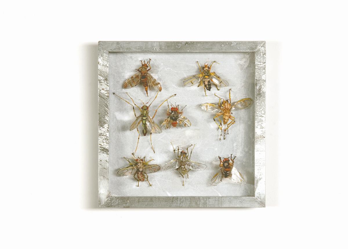 Collectie IV, Vliegen, Handgebreid, in zinken doos van 20-20 cm