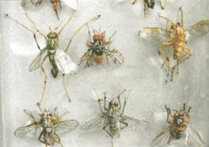 Collectie IV, Vliegen, detail
