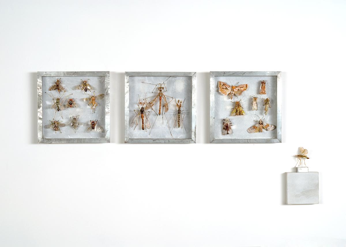 Collectie IV, Vliegen, langpootmuggen en uilen. Handgebreid Materiaal_ garen, dun ijzerdraad, cellofaan, gouache, zink. Totale opstelling achter een plexiglasplaat van 108-50 cm. 2008