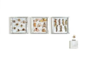 Collectie V, Vliegen, beervlinders en rupsen. Handgebreid Materiaal_ garen, dun ijzerdraad, cellofaan, gouache, zink. Totale opstelling achter een plexiglasplaat van 108-50 cm. 2008