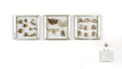 Collectie VI Bijen, vedermotten en grasmotten