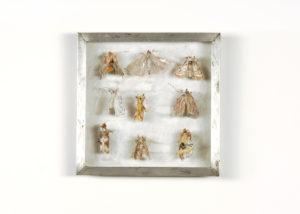 Grasmotten Collectie VI Handgebreid in zinken doos van 20-20 cm