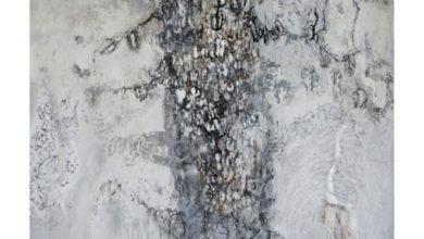 Kauriboom