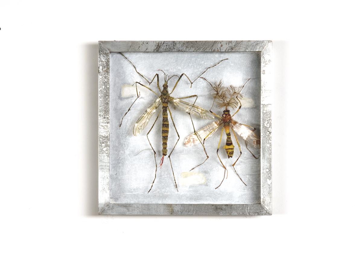 Langpootmuggen Collectie III Handgebreid, in zinken doos van 20-20 cm