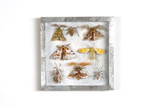 Spanners, Collectie III Handgebreid, in zinken doos van 20-20 cm